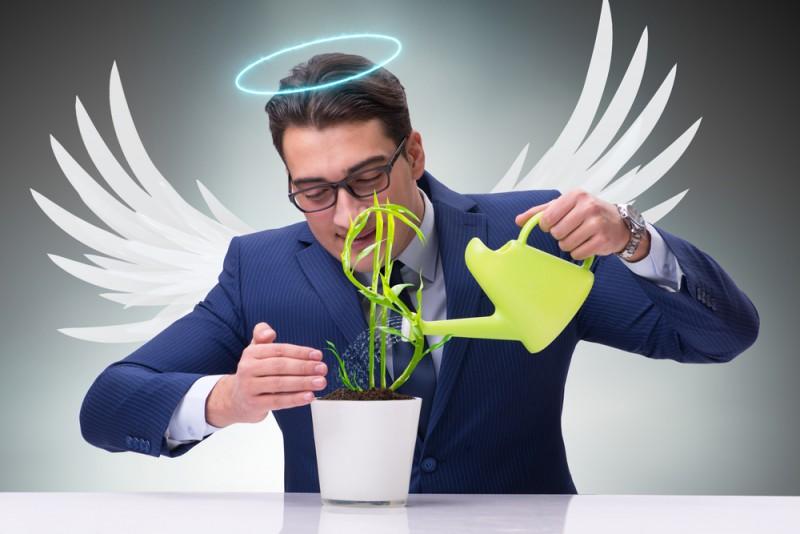 Que apoio esperar do investidor anjo? — StartSe