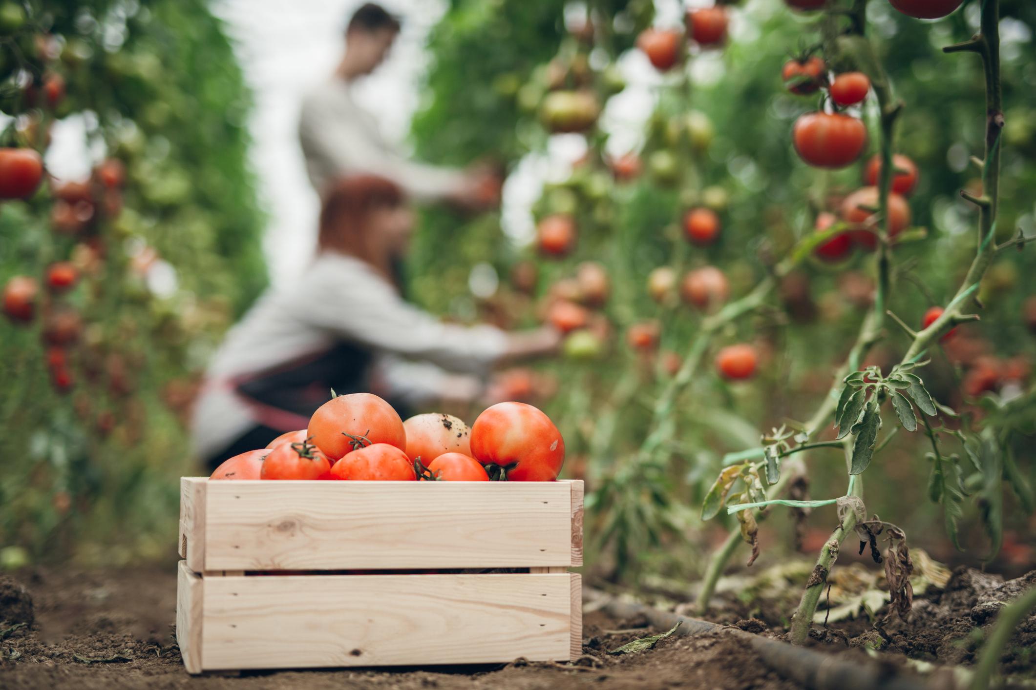 tecnologia no setor alimenticio